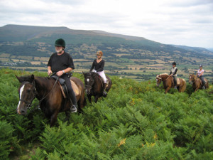 Horse Riding Holidays Wales Brecon Beacons Welsh Cobs through bracker