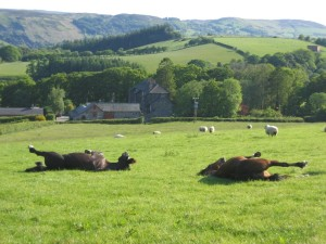 Horse Riding Holidays Wales Brecon Beacons Weekends Short breaks Welsh cobs
